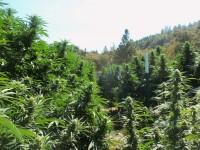 plants clean green vert
