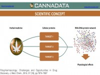 A flowchart of the scientific concept behind herbal medicine research