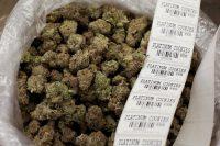 stickerscannabis
