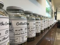 The shelves of Sproutly boast over 75 strains of cannabis from Jacques' farm.