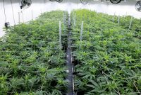 One of the cultivation facilities at Outco