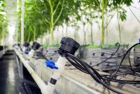 Plant irrigation and fertigation procedures are determined via experimentation