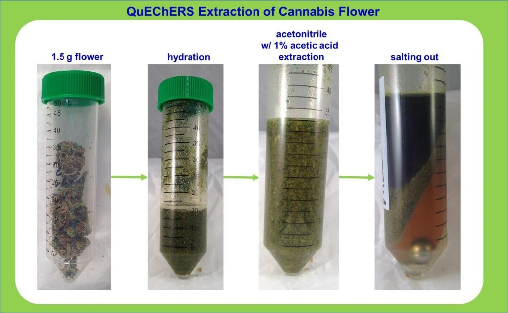 Modified QuEChERS extraction using 1.5 grams of cannabis flower. Courtesy of Julie Kowalski (Restek Corporation), Jeff Dahl (Shimadzu Scientific Instruments) and Derek Laine (Trace Analytics).